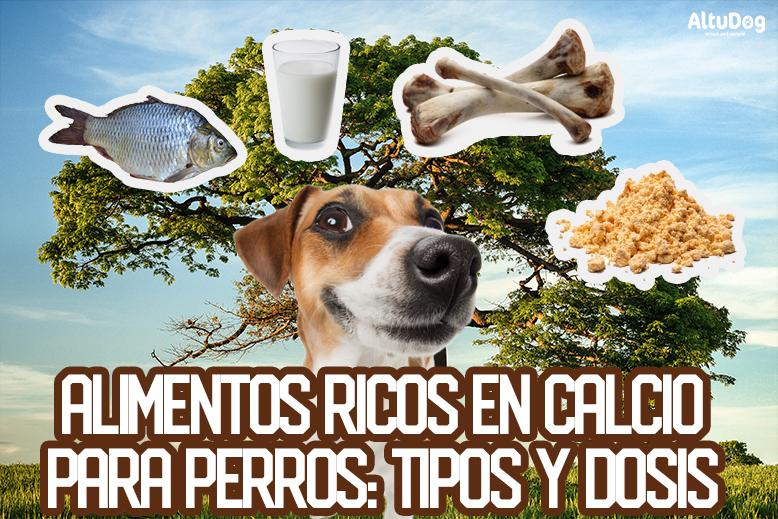 ¿cuáles son los alimentos ricos en calcio y fosforo